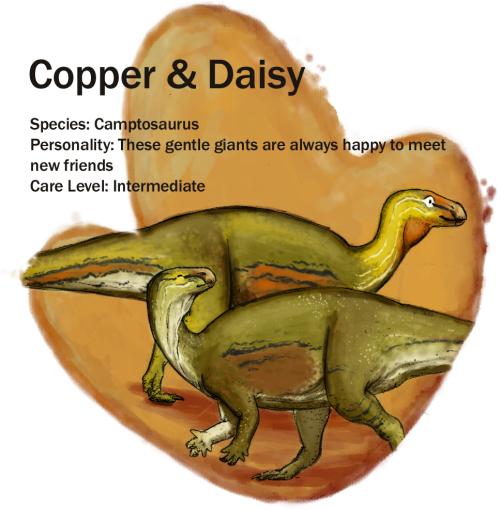 copperndaisy update