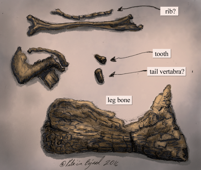 fossil bits color.png