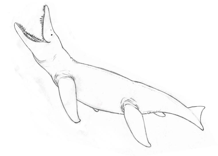 Pliosaurus sketch