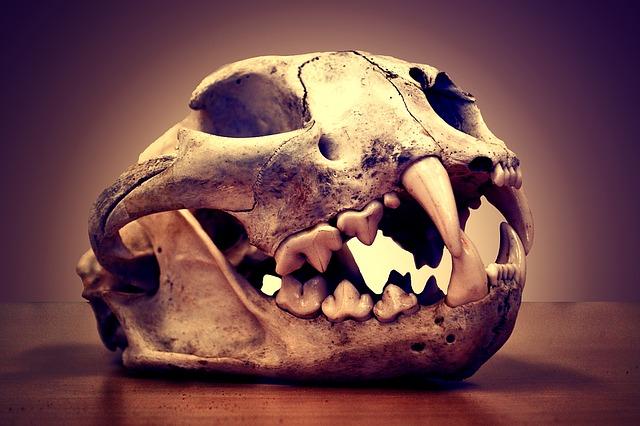skull-1170772_640