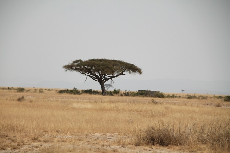 africa-192932_1280.jpg