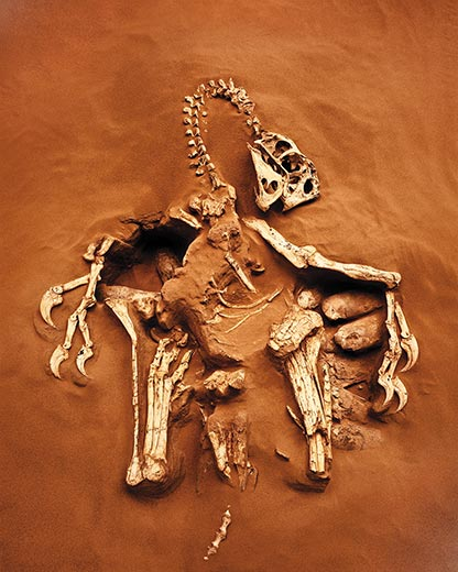 Reconstructed Citipati fossil. Credit unknown, so please let me know