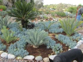 "Others prefer wetter climates. Click ""cycads"" above to see more varieties in this person's garden. Images courtesy of troydonovan, on growingontheedge.net"
