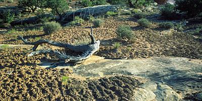 SoilCrust_landscape