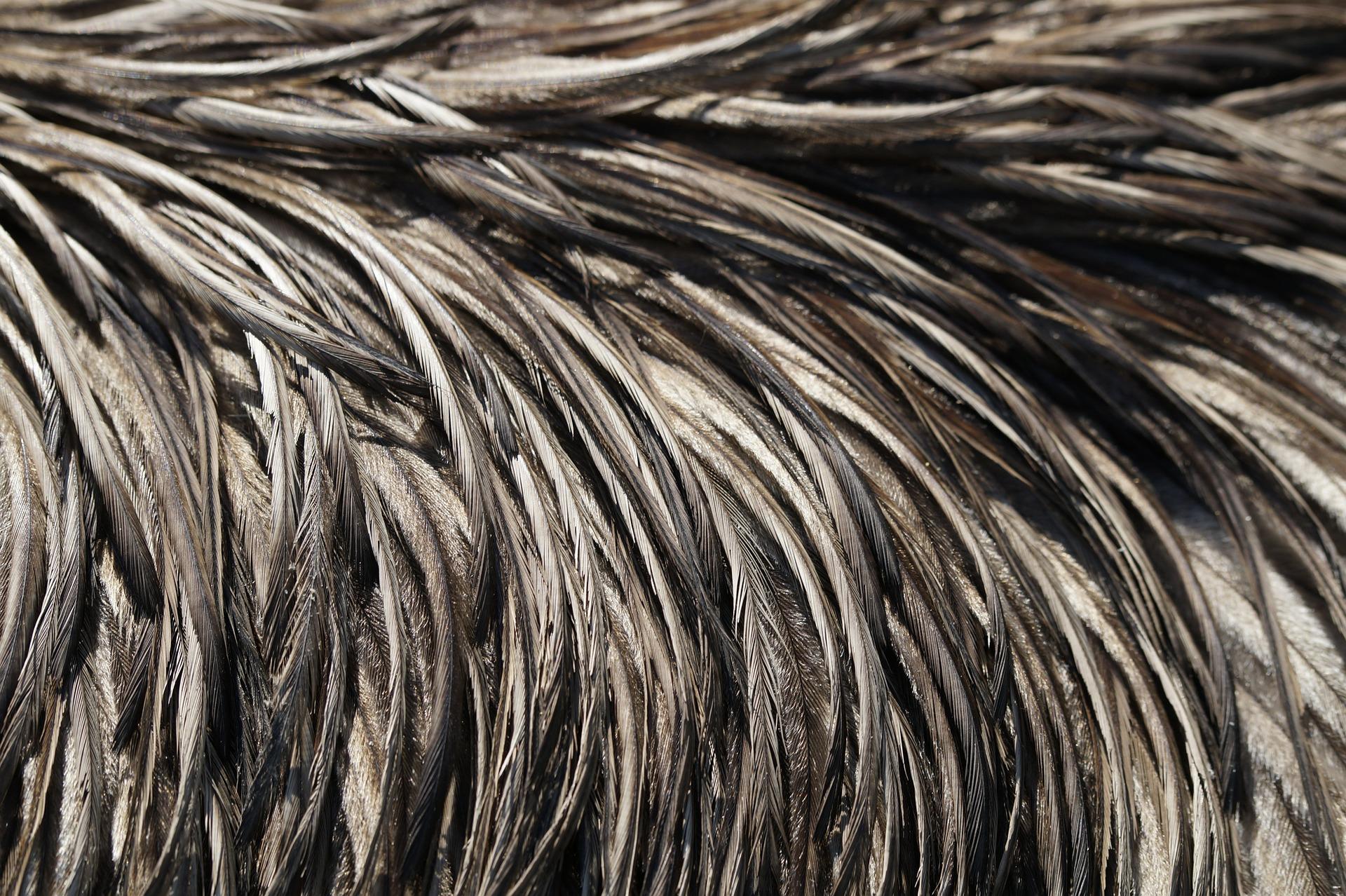 emu-feathers-332572_1920