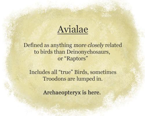 avialae-copy