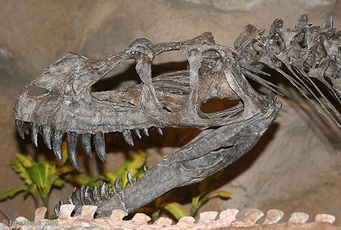 ceratosaurus74583s