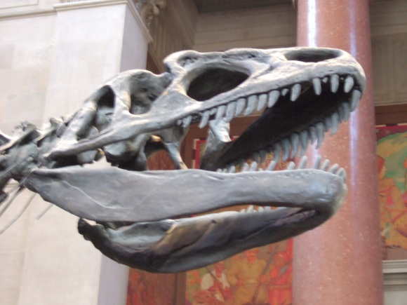 amnh-allosaurus-skull-entrance-hall.jpg