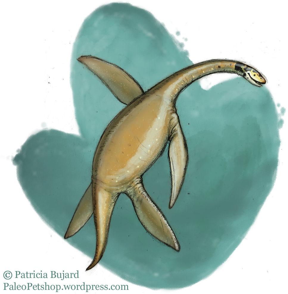 Plesiosaurus_not dino.jpg