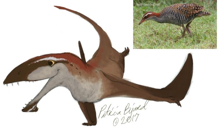 Dimorphodon_basecolor