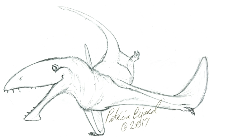 Dimorphodon_sketch.jpg