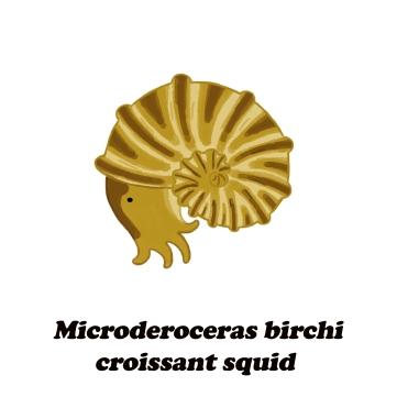 microderoceras croissant