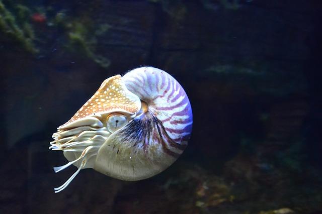 nautilus-1633615_640