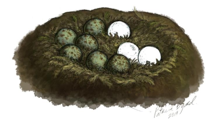 eggs_6.jpg