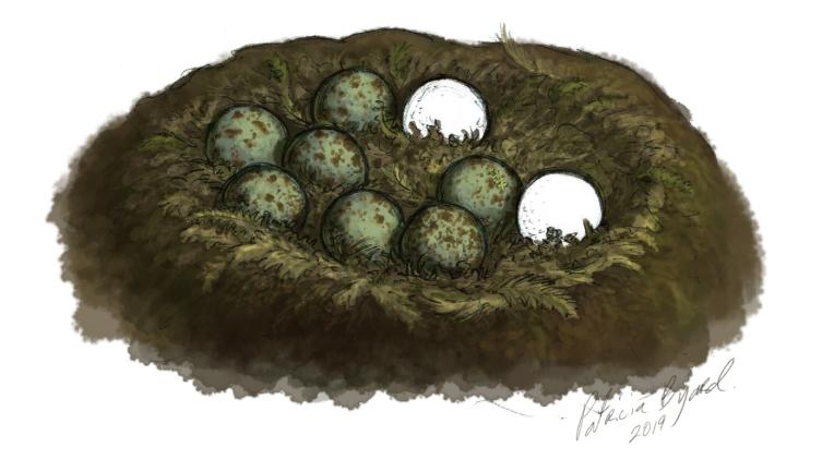 eggs_7.jpg