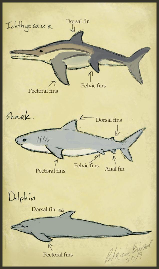 ichthyosaur comparison