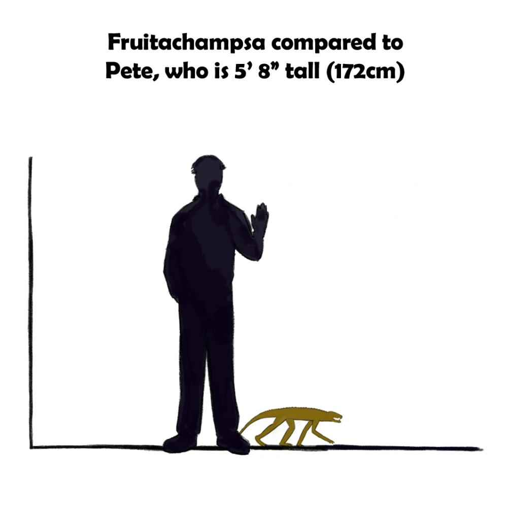 Fruitachampsa is about the size of a cat.