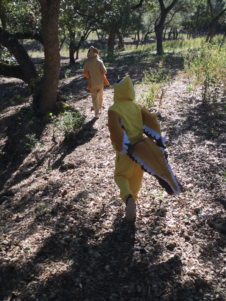 Budgie pterosaur and Sammo-saurus raptor traipsing through the little woods behind our house.