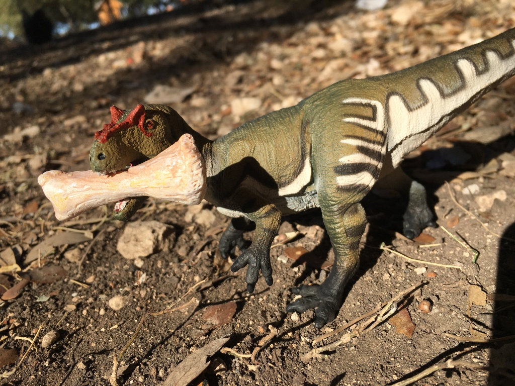 An Allosaurus has a big bone.