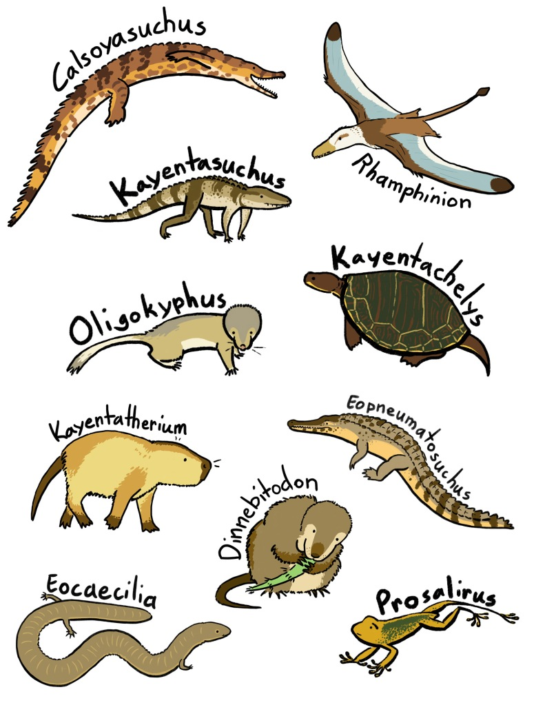 Miscellaneous Kayenta menagerie from 2020.