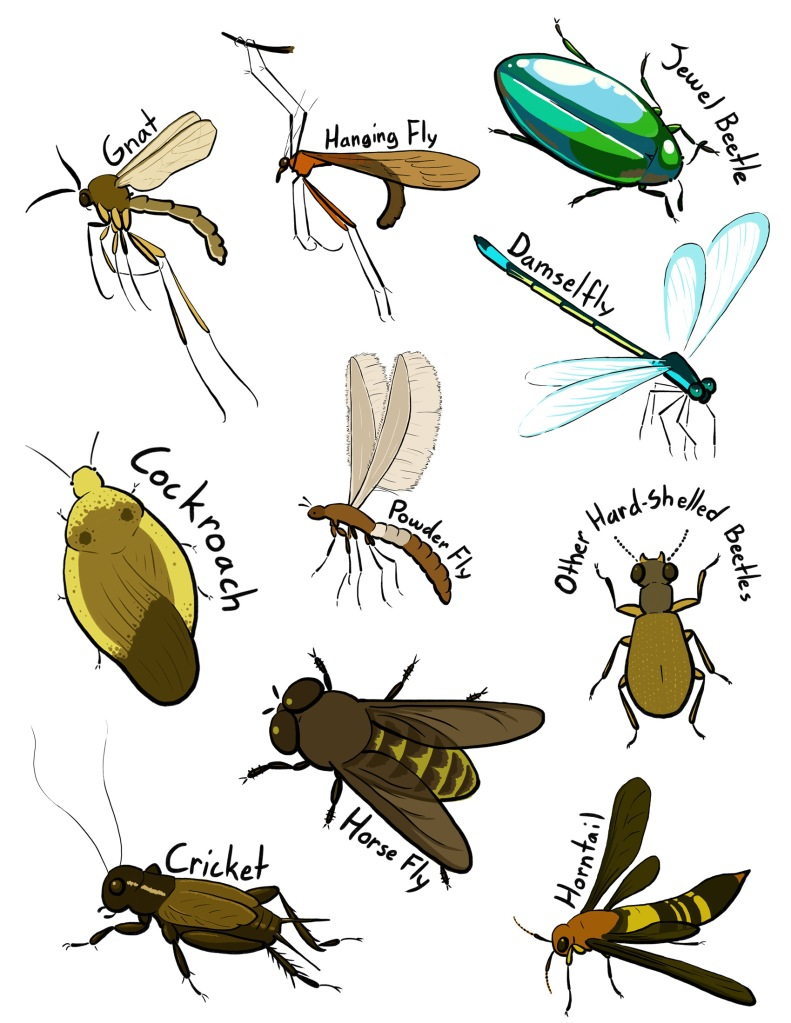 More insects