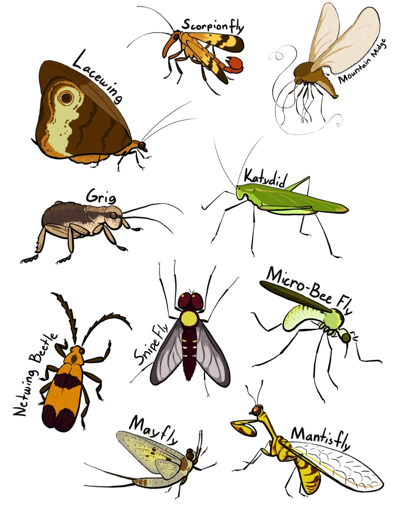 Yet more insects!