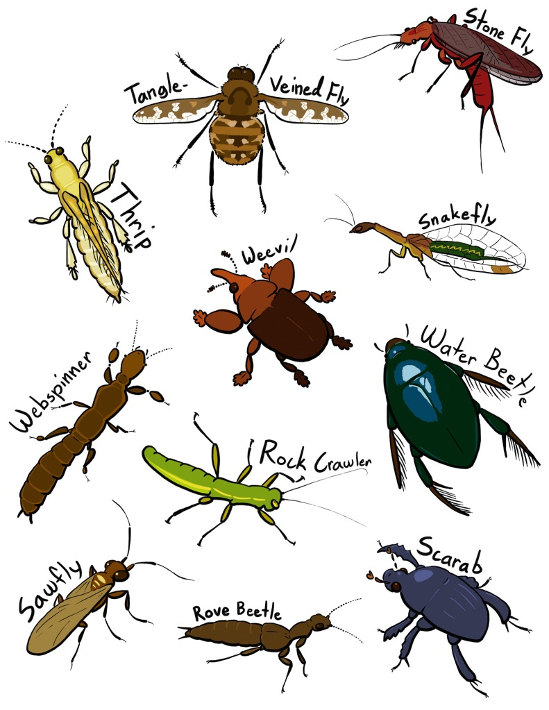 So. Many. Insects!