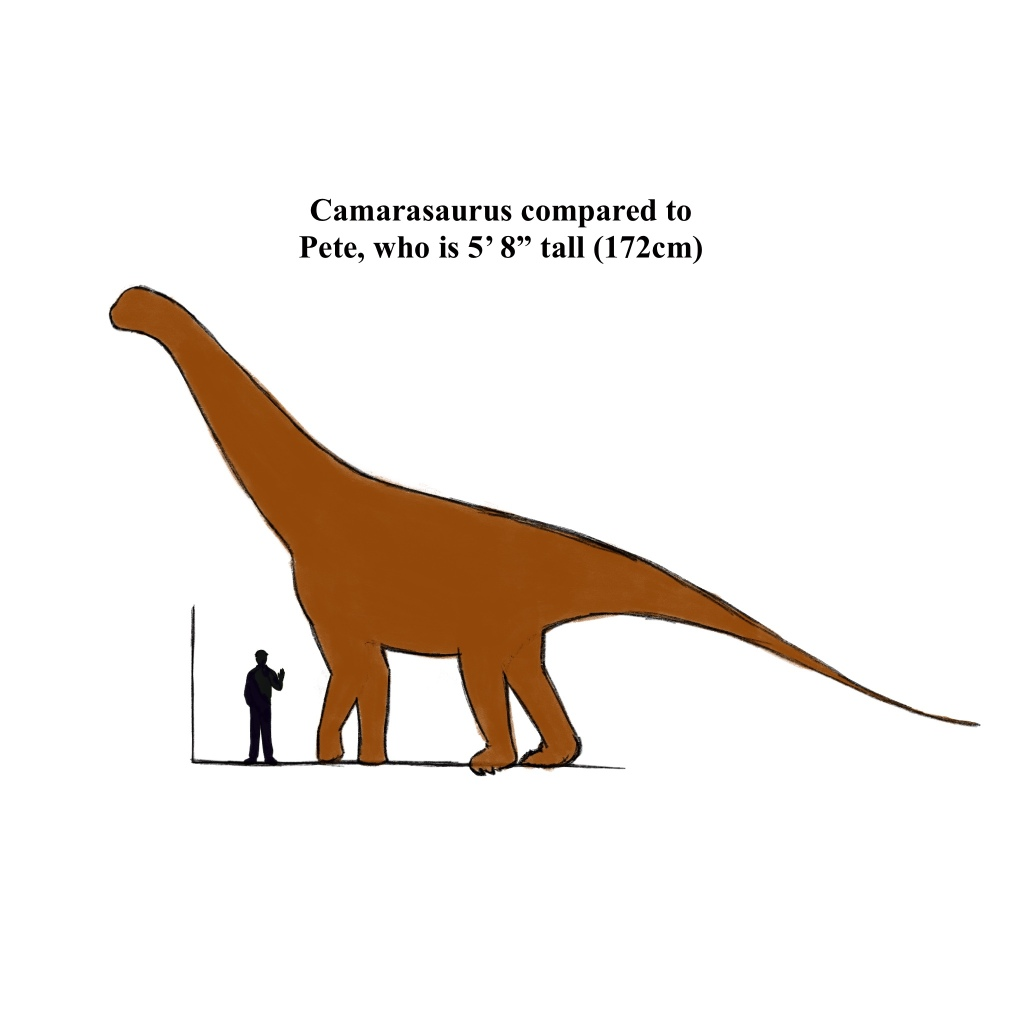 Most Apatosaurus wouldn't be quite as large as some sources portray them. That said, they're still enormous! This one is a modest size, just small enough to tickle her belly.
