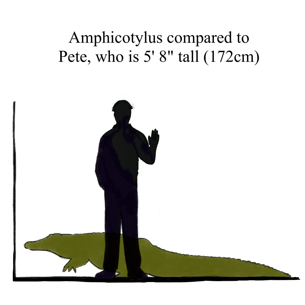 Amphicotylus is about 10 feet long, so kinda average. It's perfectly content in its averageness.