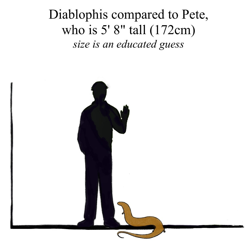 It's hard enough to measure live snakes, let alone extinct ones. Let's guess 5 feet.