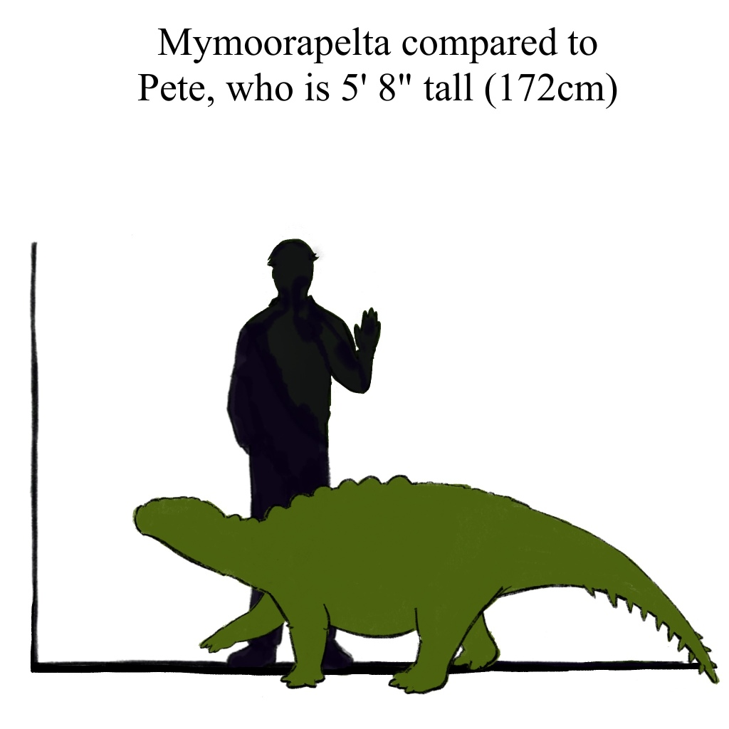 Mymoorapelta is about the size of your average coffee table, but are generally too bumpy for placing drinks. So I don't recommend it.