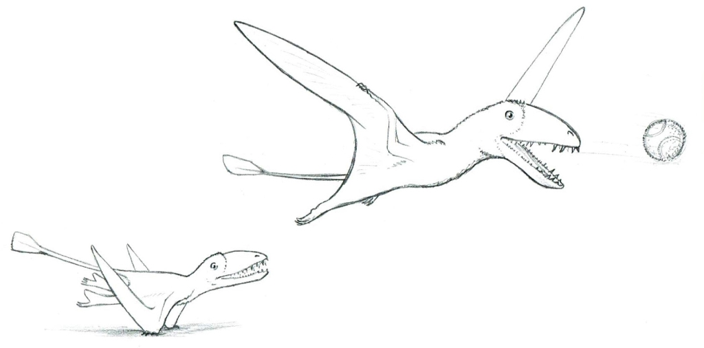 Dimorphodon launches into the air to catch a ball.