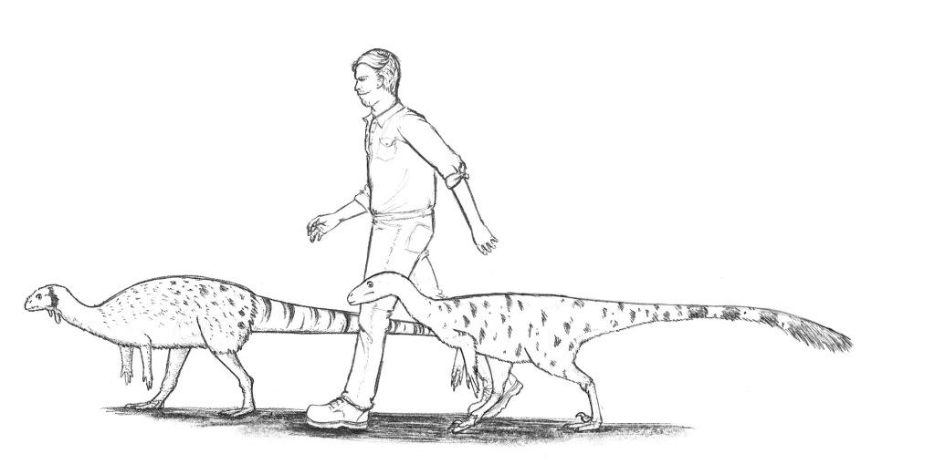 Frenemies? Pete takes Nina the Nanosaurus and Opie the Ornitholestes for a walk.